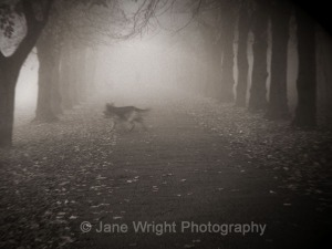 Dog In The Fog by Jane Wright Photography