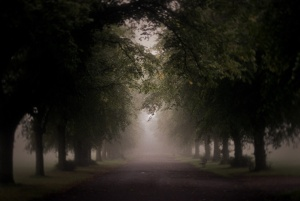 Foggy Avenue