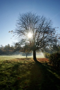 November morning sun